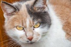 En closeup av en härlig strimmig kattkatt med gula ögon royaltyfria bilder