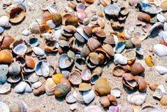 En closeup av nordliga snäckskal som ligger i sanden sommar för snäckskal för sand för bakgrundsbegreppsram semester Turism Natur royaltyfri foto