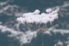 En closeup av en växt som täckas i snö royaltyfri bild