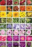 En collage av blommor, frukter och sidor, lodlinje Arkivfoton