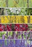 En collage av färgrika växter av olika färger Arkivbild