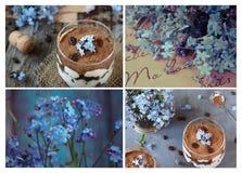 En collage av foto av tiramisuen i exponeringsglaset, blått blommar glömma-mig-nots En bukett av glömma-mig-nots på papper Royaltyfria Foton
