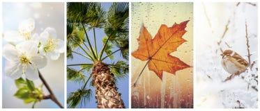 En collage av fotografier är säsongerna royaltyfria foton