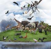 En collage av vilda djur och fåglar Arkivbild