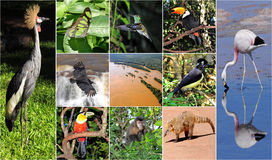 En collage som göras från Iguazu nationalparkbilder. Arkivfoton