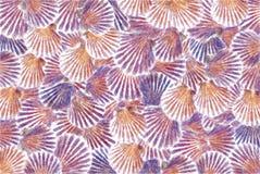 En colores Pastel-Mar-SHELL-fondo ilustración del vector