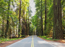 En conduisant la promenade en voiture par l'ivrogne, verdissez la forêt de séquoia Image stock