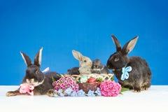 En conejitos de un fondo del azul cerca de una cesta con los huevos de Pascua adornados con las flores Imagenes de archivo