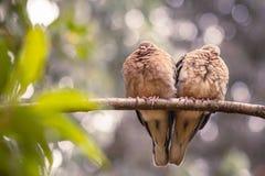 En copple av fåglar är en duvahjärta fotografering för bildbyråer