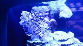En Coral World Underwater Observatory en Eilat almacen de metraje de vídeo