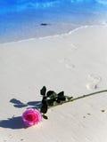 En costa de mar una floración color de rosa y las impresiones de los pies desnudos que van al mar Imagenes de archivo