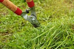 En coupant l'herbe développez-vous dans le jardin images libres de droits
