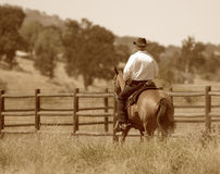 En cowboy som rider hans häst i en äng. Royaltyfri Bild