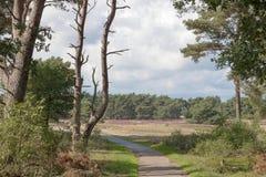 En cykelväg som leder in i ett skogområde i naturlig reserv i Nederländerna arkivfoton