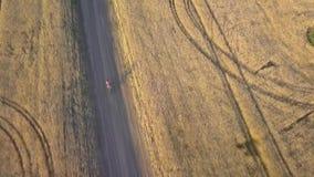 En cyklist rider längs vägen mellan jordbruks- fält stock video