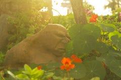 En dålig människoätande jättebesökare i trädgården Royaltyfria Bilder