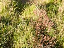En död växt som på våren svänger ljust med gräsplansidor i th royaltyfri fotografi