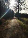 En dag i skogen Arkivfoto
