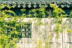 En dehors des murs de la croissance en bambou Photos libres de droits