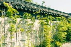 En dehors des murs de la croissance en bambou Photos stock