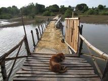 En del lago Imagen de archivo