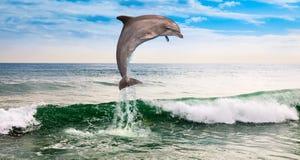 En delfin i havet Royaltyfria Bilder