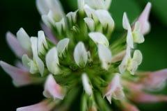 En delikat blommamakro som är mjuk och Fotografering för Bildbyråer