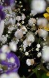En delikat bukett av blommor Arkivbild