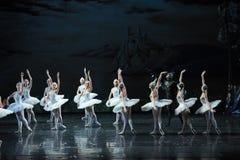 En demon som lurar i svanarna som väntar till hand-balett svan sjön Royaltyfria Bilder