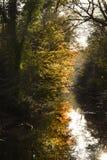 En dimmig höstmorgon med färgglade sidor som reflekterar i vatten Royaltyfria Bilder