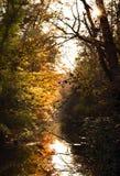En dimmig höstmorgon med guld- sidor som reflekterar i vatten Royaltyfri Fotografi