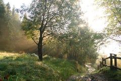 En dimmig morgon i Beskidy berg Arkivfoto