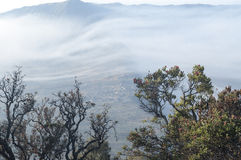 En dimmig morgon på Desa Pasuruan, East Java Royaltyfria Foton