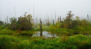 En dimmig nedgångmorgon på den Guste ön i södra Louisiana Royaltyfri Fotografi