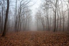En dimmig skog royaltyfria foton