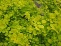 En distinkt svart liten fluga royaltyfri foto