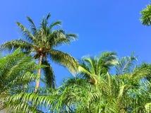 En djungel av palmträd arkivfoto