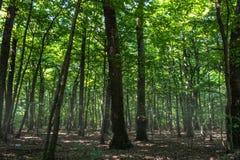 En djup dimmig skog Royaltyfria Foton