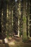 En djup mörk skotsk skog royaltyfri fotografi