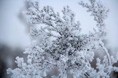 En djupfryst växt som täckas med frost Arkivfoto