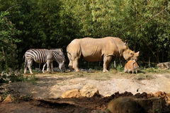 En djur get Royaltyfri Fotografi