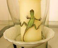 En ödla som fångas i en glass stearinljusskugga Arkivbilder