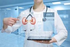 En doktor pekar på det tålmodiga digitala medicinska kortet eller den treatnent strukturen för njure royaltyfri foto