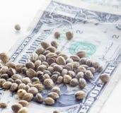 En dollar sedlar och hampafrö Arkivbilder