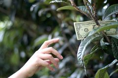 En dollarräkning på träd Arkivfoton