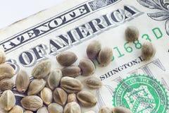 En dollarsedel och hampafrö Arkivbilder
