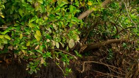 En doppad skog i Brasilien fotografering för bildbyråer