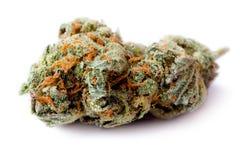 En dos av marijuana, medicinsk hampa, ogräs Arkivfoton