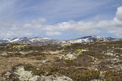 En Dovrefjell Fotografía de archivo