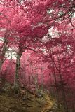 En drömlik höstlig skog royaltyfri bild